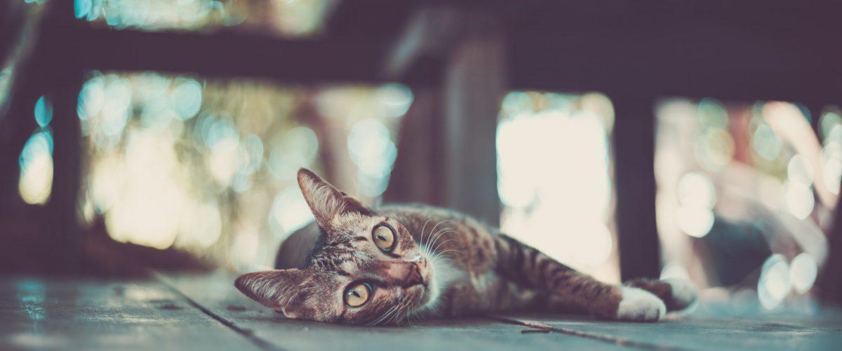 cat kitty looking whisker faithful